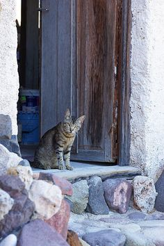 Photo by my husband Thi cat was standing in the doorway of an old farmhouse in the Parque Natural de Cabo de Gata, Almeria, Andalucia, Spain