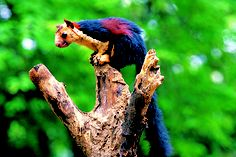 Top Five Wildlife Sanctuaries in South India: If you value to determine the interesting creatures, then South India wildlife tour will definitely delight you. Munnar, Kochi, Wild Life, Indian Giant Squirrel, Parks, Flora Und Fauna, Kerala Tourism, Creature Feature, Tourist Spots