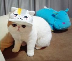 Must look and READ through entire post!!! faaaaabulous!! 43 Fashionable Looks Worn By Snoopy The Cat