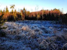 naturensdronning: Rimfrost
