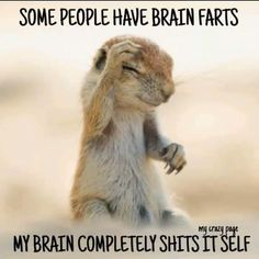 List of 6 best Funny Humor Sarcasm in week 9 Animal Jokes, Funny Animal Memes, Funny Animal Pictures, Cute Funny Animals, Funny Photos, Funny Jokes, Hilarious, Word Pictures, Chronic Illness Humor