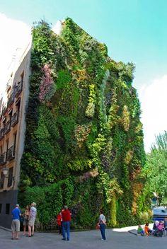 Green wall natura e architettura