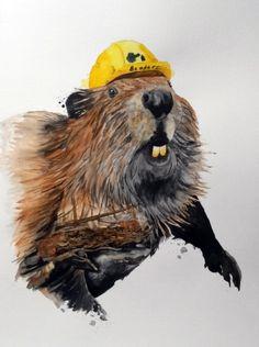 Watercolor illustration of beaver