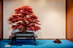 Art Festival, Christmas Tree, Holiday Decor, Flowers, Home Decor, Teal Christmas Tree, Decoration Home, Room Decor, Xmas Trees