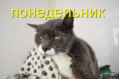 Man Humor, Animals And Pets, Good Morning, Laughter, Dog Cat, Cats, Adorable Animals, Humor, Pets