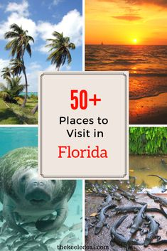 50+ Things To Do in Florida - The Keele Deal