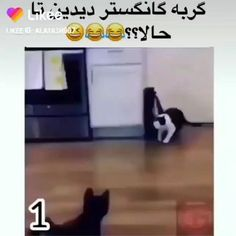 Crazy Funny Videos, Funny Videos For Kids, Funny Animal Videos, Funny Animal Pictures, Funny Cute Cats, Cute Baby Cats, Cute Funny Animals, Baby Tortoise, Crazy Things To Do With Friends