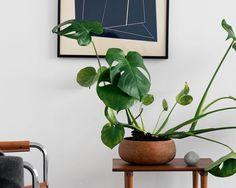 """人気のインテリアグリーン、観葉植物と言えば上位にくる""""モンステラモンステラをどんな飾り方をしていますか。モンステラをより楽しめる飾り方を紹介します。   2ページ目"""