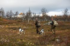 """""""Varför vill länsstyrelsen inte prata om fjälljakten nu?"""" - Svensk JaktSvensk Jakt"""