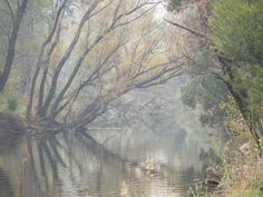 By The Ovens River