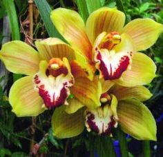Eknéry ❤❀❤ Beautiful Flowers, Plants, Flowers, Exotic, Pretty Flowers