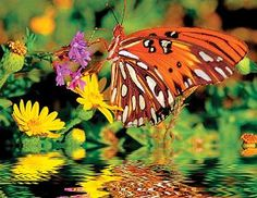 Magnificent Monarch now in the garden!  500-piece jigsaw puzzle by Springbok Puzzles.