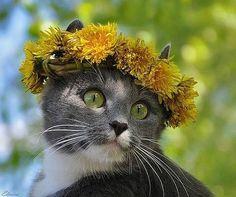 Flower power kitteh