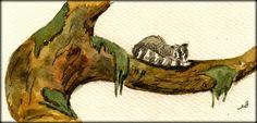Raccoon sleeping original watercolor painting by Juan Bosco