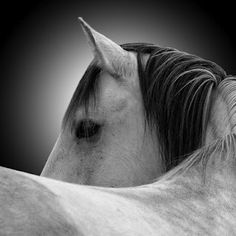 I wish it wasn't so hard to capture the beauty, strength and character of a horse in photos. This photo does have a nice feel to it though.