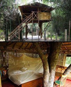 Tree House, India