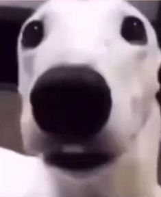 English Phrases, Cute Anime Pics, Cursed Images, Funny Memes, Dogs, Animals, Random, Strange Things, Funny Humour