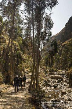 En búsqueda de las puyas en Quebrada de Masma Chicche, provincia de Jauja, región Junín, Perú.