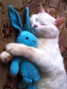 """""""i tell my bunny eberyting..."""""""