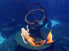 Mermaid Melissa Atlantis Aquarium Professional Mermaid Performer For Hire Real Life Mermaid Found, Real Life Mermaids, Mermaids And Mermen, Mermaid Under The Sea, The Little Mermaid, Mythical Creatures, Sea Creatures, Realistic Mermaid Tails, Professional Mermaid