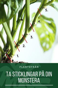 Fake Plants, Indoor Plants, Planting Succulents, Planting Flowers, Garden Spells, Get Up And Walk, Plant Decor, Hydroponics, House Plants