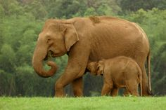 Periyar Tiger Reserve - Kerala, India