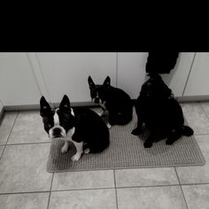 My 3 pups by the heat.