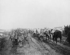 WWI, 3-11 Nov 1916, Somme, The Battle of Ancre Heights. Canadian troops returning from the trenches pass pack mules loaded with ammunition on a muddy road to a forward area. ©IWM
