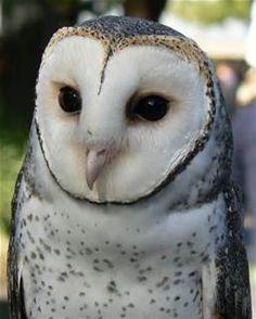 beautiful owls