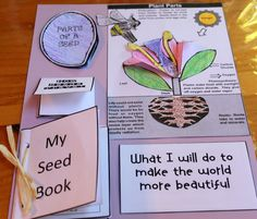 Lap book for seeds, used here as a literacy extention.