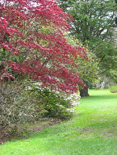 Plas Newydd Garden