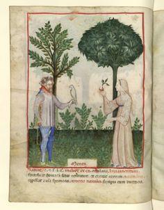 Nouvelle acquisition latine 1673, fol. 30v, Flore: menthe. Tacuinum sanitatis, Milano or Pavie (Italy), 1390-1400.