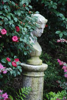 Athena, photo taken by H. Burchstead