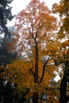 Autumn Photography!