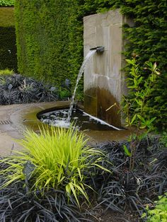 "black mondo grass and gold Japanese forest grass- love how from the right angle the fountain is watering the ""green"" grass"