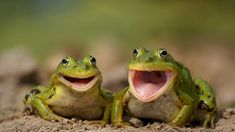 Animals laughing | World of Photos