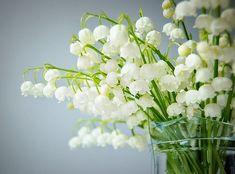 LILY OF THE VALEY : Nom plus poétique que Muguet…mais dans tous les cas, semble-t-il : Porte Bonheur ! On fait remonter cette Tradition du Muguet au 1er mai à la Renaissance....... les Noces de muguet : on offre 13 fleurs .... en savoir plus follow me !