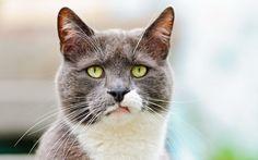 Esse gato que acabou de se dar conta que ele é um bicho de estimação.
