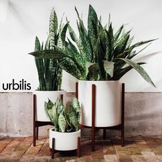 Add a sophisticated touch to your living space with Urbilis indoor planters! Available in a variety of sizes and colors.