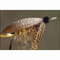 Image result for damian welsh fly tyer