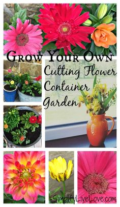 Grow your own cutting flower container garden and enjoy fresh flowers in your ho. Grow your own cu Growing Flowers, Cut Flowers, Fresh Flowers, Potted Flowers, Gardening For Beginners, Gardening Tips, Organic Gardening, Cut Flower Garden, Flower Pots