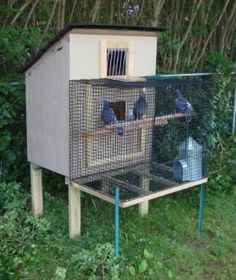 smallest racing pigeon loft - Google Search