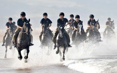 Great pictures of military horses enjoy well-earned break in the West Country - Horse & Hound