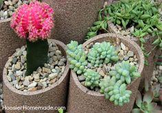 Como Montar um Jardim de Suculentas com Material Reutilizado | Reciclagem no Meio Ambiente