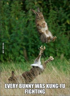 Every bunny was kung-fu fighting! // I laughed WAY harder at this than I should have. Yoonmin, Kung Fu, Funny Cute, The Funny, Super Funny, Best Funny Pictures, Funny Images, Funny Animals, Cute Animals