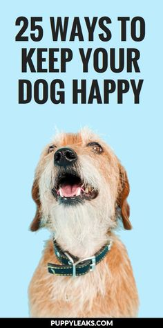 Dog Behavior 25 Ways to Keep Your Dog Happy. From a little more snuggle time on the couch to switching up your dog walking routine, here's 25 ways to keep your dog happy. Best Dog Quotes, Dog Quotes Funny, Pet Quotes, Dog Quotes Inspirational, Old Dog Quotes, Rescue Dog Quotes, Happy Puppy, Happy Dogs, Animal Love Quotes