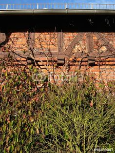 Alter Schuppen aus rotem Backstein mit braunen Fachwerkbalken und wildem Gestrüpp in Wißmar