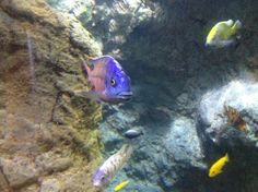 Coney Island Aquarium, NYC