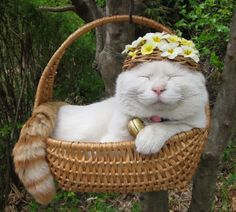 hat cat.