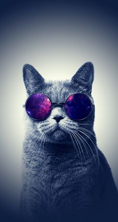 Aww so cute!! Who knew that a cat could wear sunglasses.